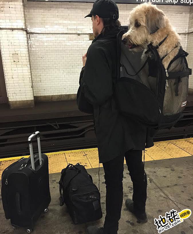 """地铁不让带狗狗?纽约背狗客开脑洞""""狗袋""""方法"""