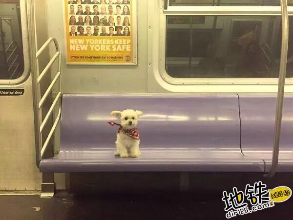 """开心一刻:地铁上的""""怪人"""",请开始你们的表演! 怪人 地铁 交通 城市 轨道休闲  第3张"""