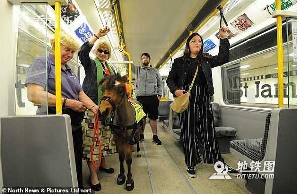 英国地铁迎来特殊乘客:导盲马熟悉环境准备上岗 残疾人 马路 伦敦 导盲马 英国地铁 轨道动态  第2张